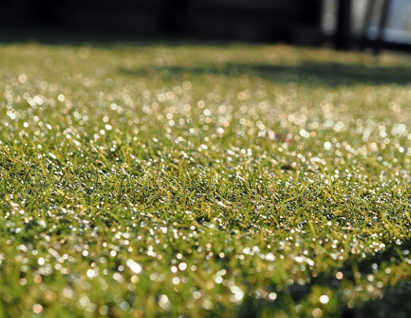 Artificial Grass Leicestershire - Prestige Group UK - Based In Leicester